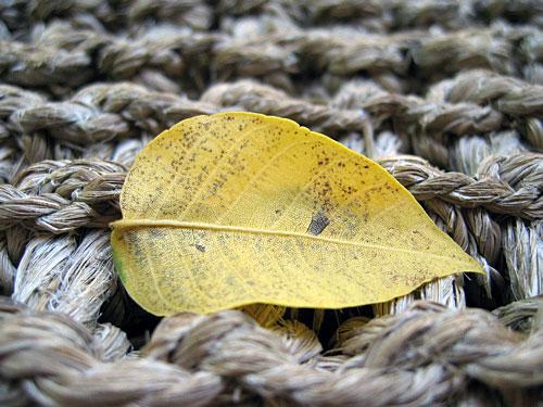 First leaf of fall
